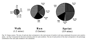 The partition of energy (stress x time) between leg joints for walking, running and sprinting.